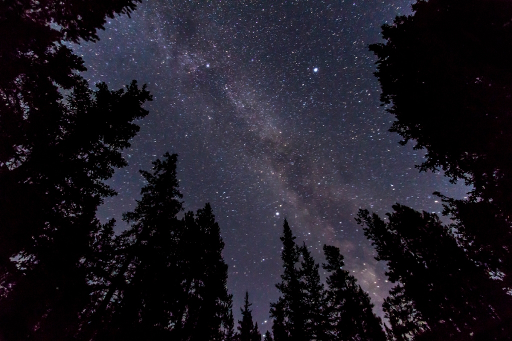 Milky Way Amid the Trees