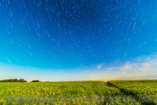 Circumpolar Star Trails over Canola Field (July 26, 2013)