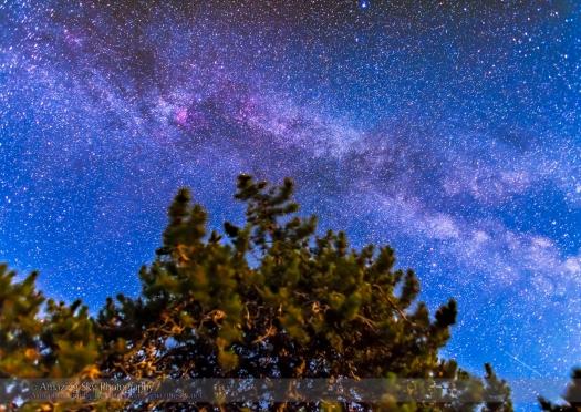 Survivor Tree and Milky Way (July 15, 2013)