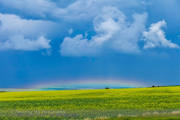 Low Rainbow over Canola Field