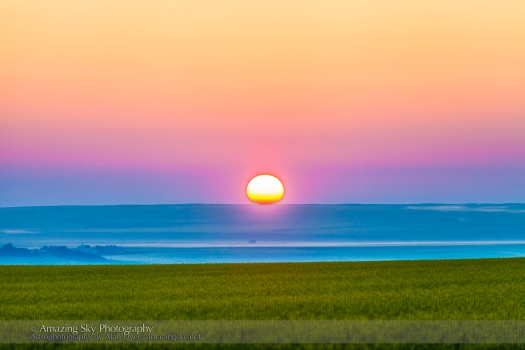 Sunrise on a Canola Field (July 9, 2013)