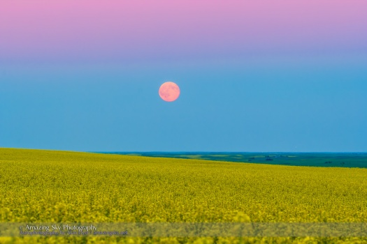Super Moonrise over Canola Field