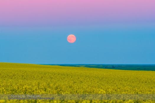 Super Moonrise over Canola Field