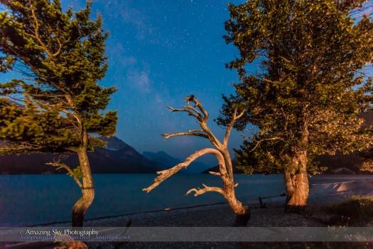 Waterton Lakes Trees