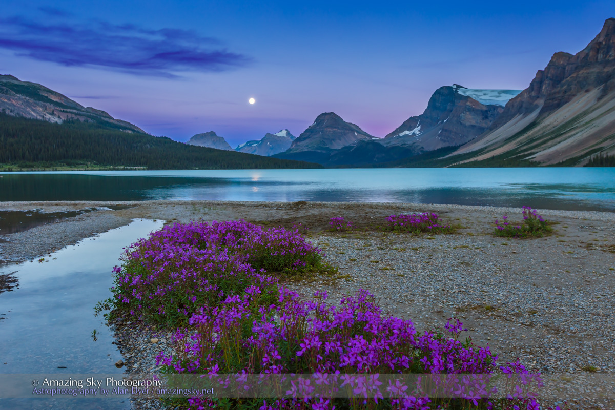 Full Moon and Flowers at Bow Lake