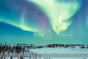 Aurora from Churchill #5 (Feb 20, 2015)