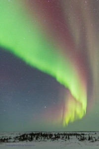 Auroral Curtain over the Boreal Forest