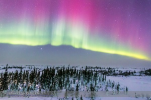 Pink Aurora over Boreal Forest #1 (Feb 20, 2015)