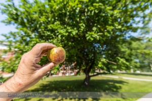 Newton's Apple #1