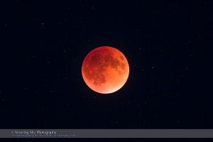 The total eclipse of the Moon of September 27, 2015, in closeup through a telescope, at mid-totality with the Moon at its darkest and deepest into the umbral shadow, in a long exposure to bring out the stars surrounding the dark red moon. This was also the Harvest Moon for 2015 and was the perigee Full Moon, the closest Full Moon of 2015. This is a single exposure taken through the TMB 92mm refractor at f/5.5 for 500 mm focal length using the Canon 60Da at ISO 400 for 8 seconds, the longest I shot during totality. The telescope was on the SkyWatcher HEQ5 mount tracking at the lunar rate.