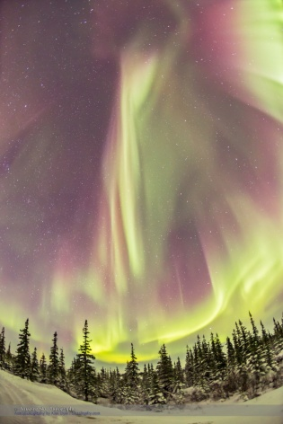 Vertical Curtains of Aurora over the Boreal Forest