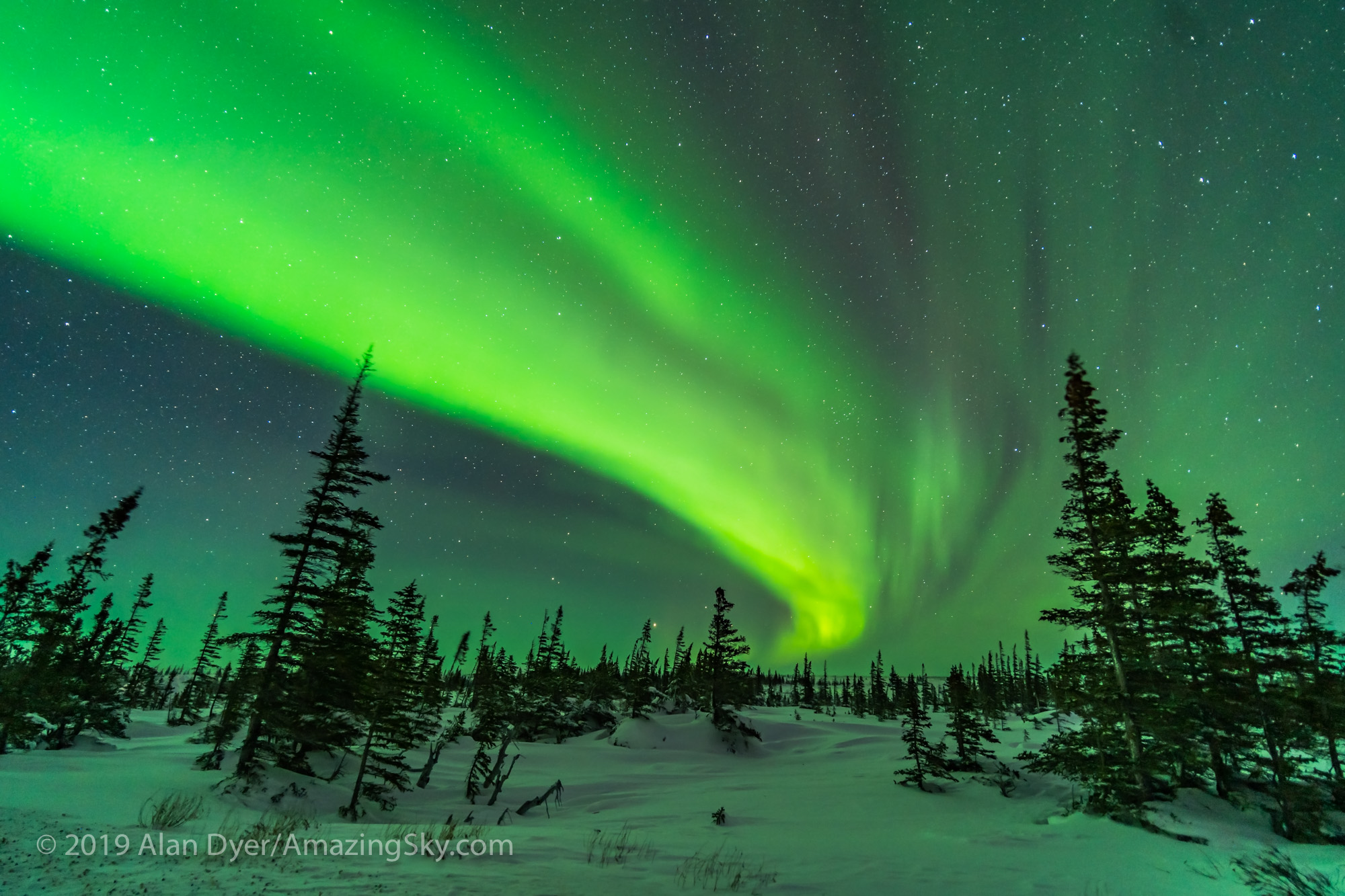 Aurora over the Boreal Forest (Feb 8, 2019)