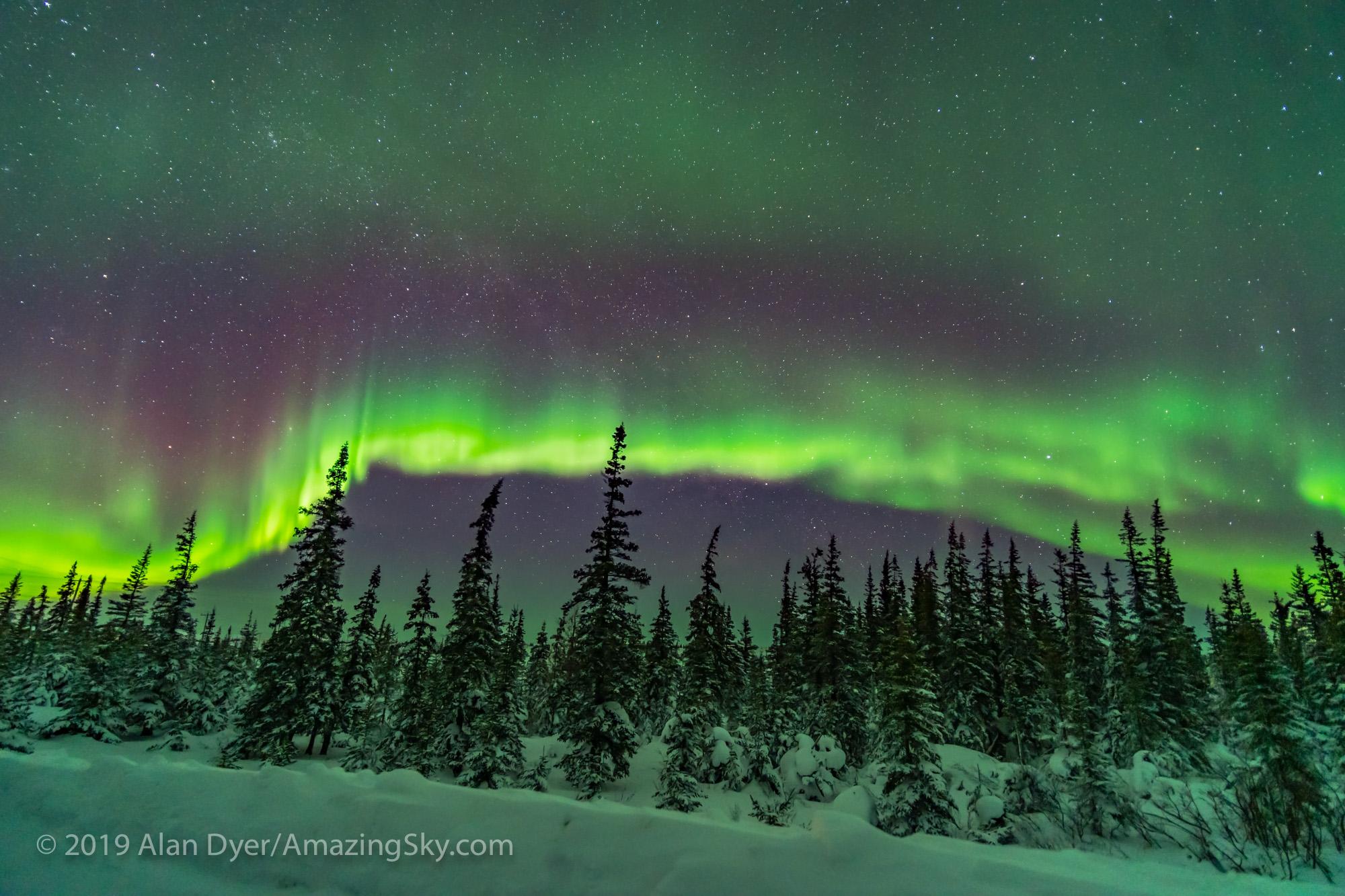 Aurora over Snowy Trees (Feb 9, 2019)