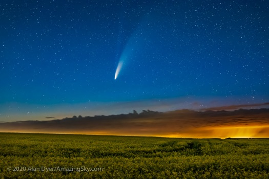 Comet over Canola Field Close-Up (July 15, 2020)